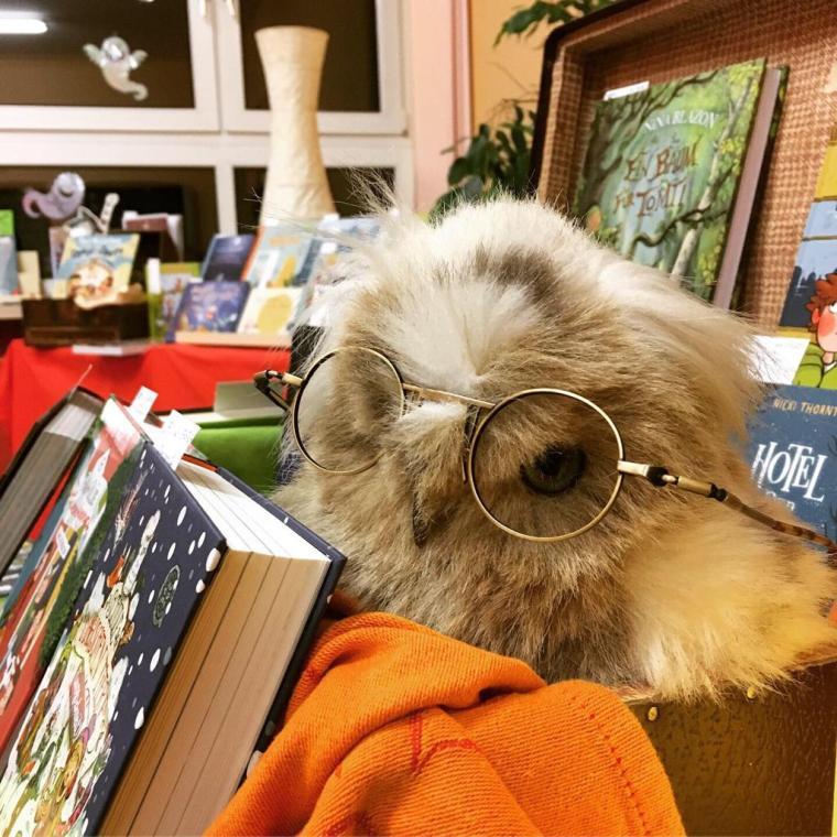 Buchausstellung mit Eule